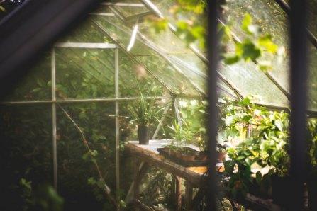 ta mot khu vuon trong nha em hoac khu vuon trong tri tuong tuong cua em - Tả một khu vườn trong nhà em hoặc khu vườn trong trí tưởng tượng của em